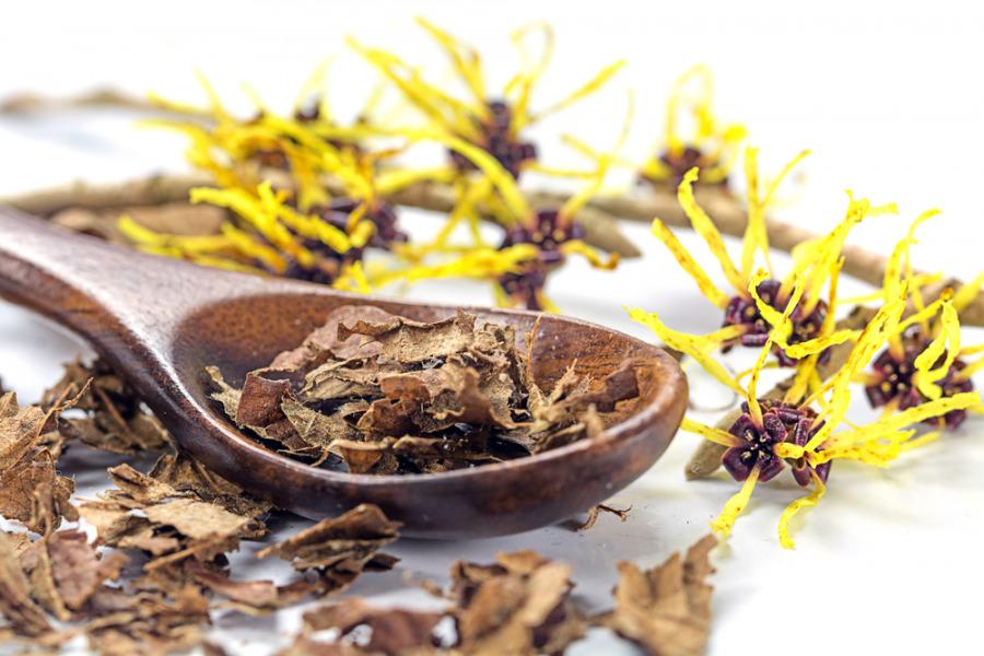 有效去暗疮印的天然方法 - 芦荟和金缕梅 Witch Hazel