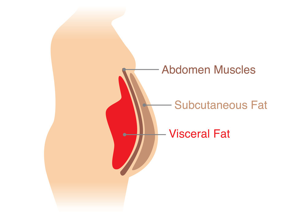 减肚腩小知识:什么是深层腹部脂肪 (内脏脂肪)
