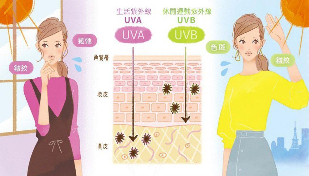 紫外線中分為UVA和UVB